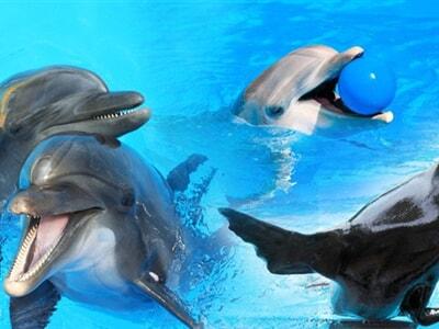 Delfinárium a Zoo